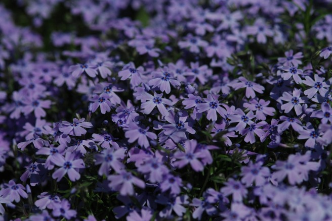 flowers-604016_960_720